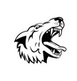head an aggressive and angry gray wolf grey vector image vector image