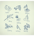 Set of garden and wild hand-drawn berries vector image vector image