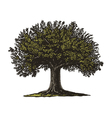Engraved Tree vector image vector image