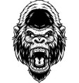 head fierce gorilla vector image vector image