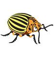 potato beetle vector image