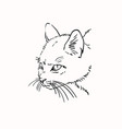 sketch scary angry cat head hand drawn linear