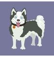 Yakutian Eskimo dog vector image