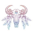 Colorful buffalo skull vector image vector image