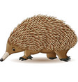 echidna isolated on white background vector image