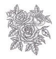 hand drawn rose flowers and leaves vintage floral vector image vector image