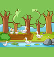 scene with ducks in forest vector image vector image