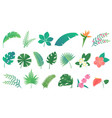 set of cartoon tropical rainforest leaves vector image