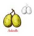 ambarella sketch fruit cut icon vector image