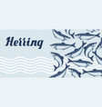 background with herring fish pacific sardine vector image
