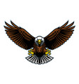 bald eagle wings open vector image vector image