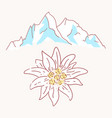 edelweiss mountains mountaineering flower symbol vector image vector image