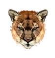 puma cougar head portrait from a splash vector image