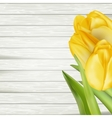Yellow tulips EPS 10 vector image vector image