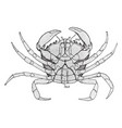 female shore crab vintage vector image vector image