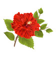 red hibiscus stem tropical flower vector image vector image
