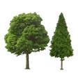 tree natural vector image vector image