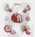 vintage ink hand drawn collection of pumking on vector image