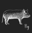 hand drawn sketch pig vector image