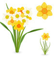 collection of daffodils spring flowers for your vector image vector image