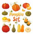 colorful pumpkin set vector image vector image