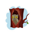 Cute owlet sitting in hollow of tree hollowed out