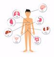 human body with internal organs body health vector image