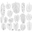 set of leaves in the contour style of tropical vector image vector image