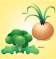 vegetables onion brocolli vector image vector image