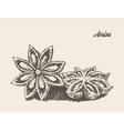 Anise vintage engraved sketch vector image