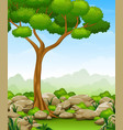 jungle landscape with tree and stone vector image