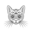 ornamental cat portrait on white vector image vector image