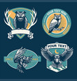 owl badge design set vector image vector image