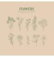 Flower Herbarium Hand Drawn Realistic Sketch vector image vector image