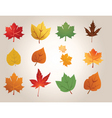 leaf types vector image vector image