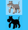 terrier dog with gray fur vector image