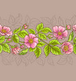 wild rose flowers pattern vector image