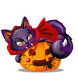 purple cat with bared fang lying on jack-o-lantern vector image
