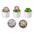 cactus and succulent plants in pots vector image