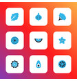 fruit icons colored set with spinach avocado vector image