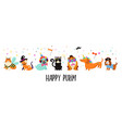 funny animals pets cute dogs and cats vector image