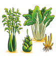 Green Vegetables Collection vector image