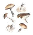lovely autumn mushrooms vector image