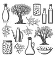 olive oil bottle tree branch with fruit and leaf vector image