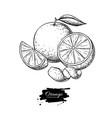 orange drawing summer fruit engraved vector image
