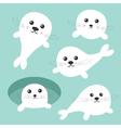 Seal pup baby harp set Ice-hole Cute cartoon vector image vector image