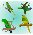 set of four colorful parrots vector image vector image