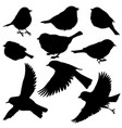 silhouettes birds vector image vector image