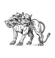 cerberus three headed dog mythical greek antique vector image