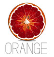 juicy vitamin fruit orange citrus vector image vector image